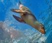 Surfin' n Swi...