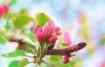 On the Spring Bra...
