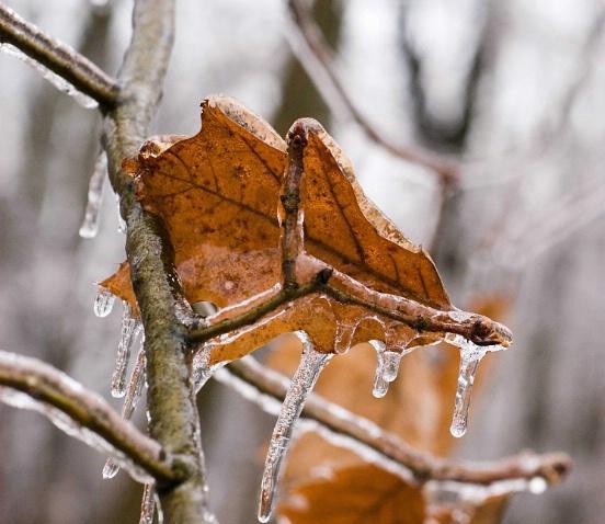 icy oaks - ID: 3280193 © Sibylle Basel