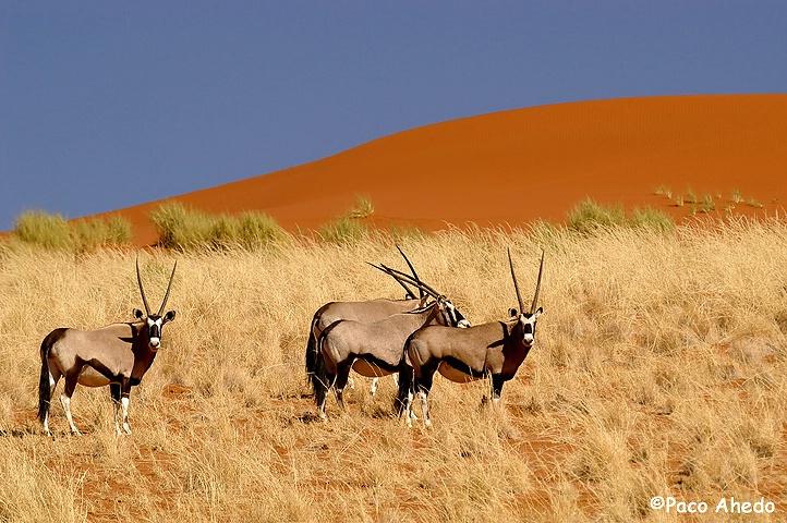 Namib colors