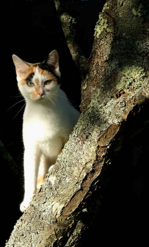 Nishi in a tree