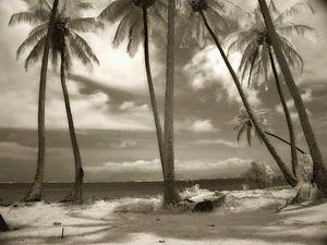 Palms, Molokai