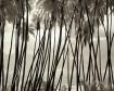 Palm Grove I