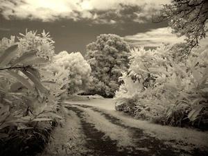 Tropical Hideaway I