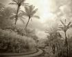 Tropical Hideaway...