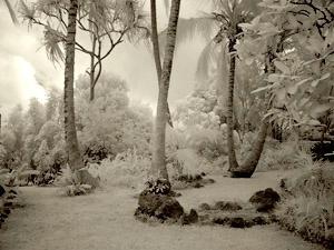 Tropical Hideaway III