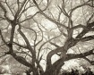Branches I