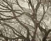 Branches II
