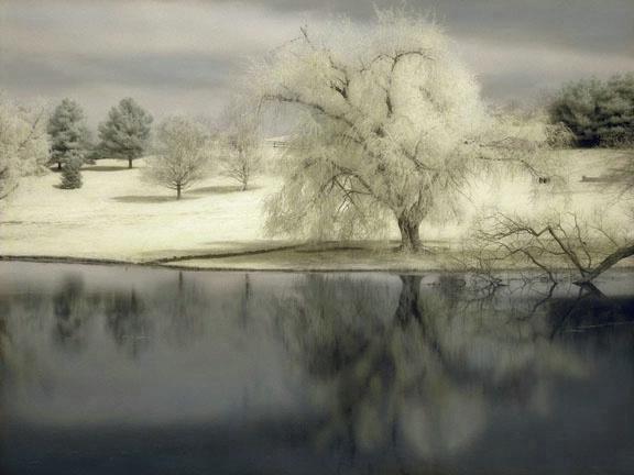 Tree & Pond II