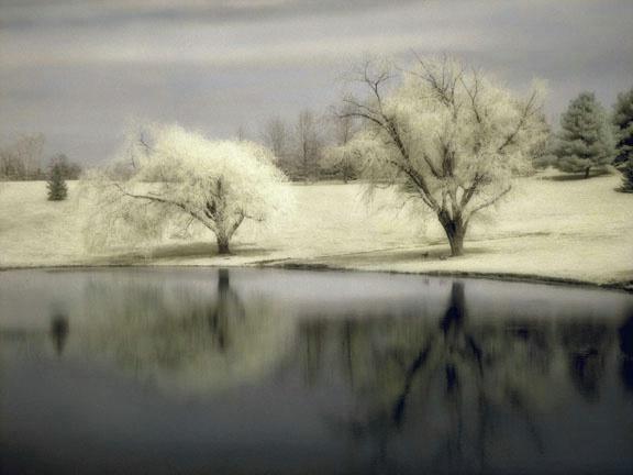 Trees & Pond II