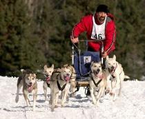 Athletes of Winter