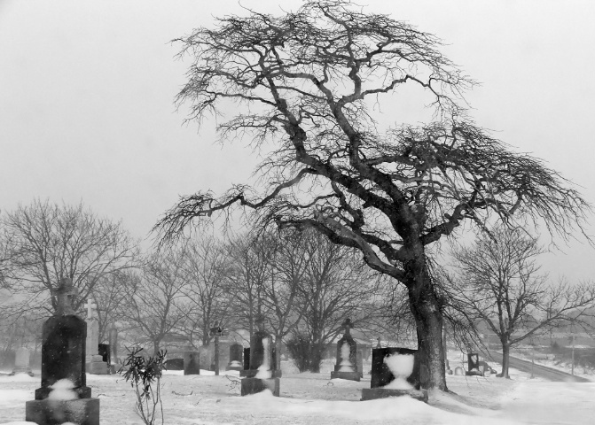 The Perfect Graveyard Tree