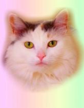 Psychedeli-kitty-cat