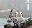 Flocking Together