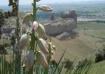 Monument in Nebra...