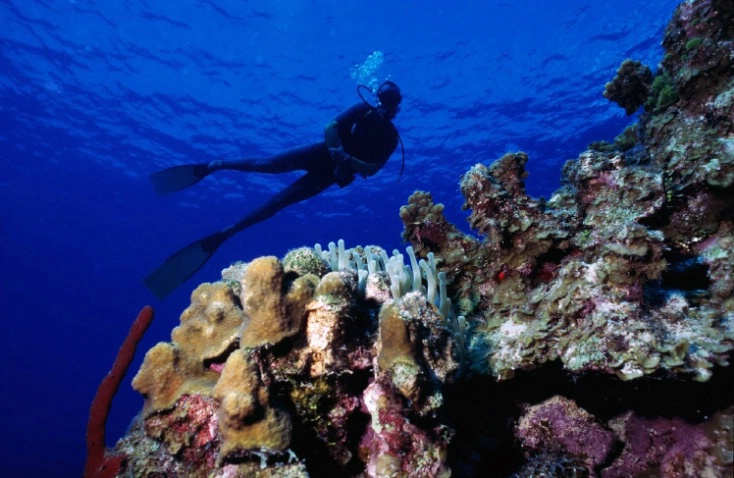 Reef and Diver - ID: 3333235 © Wayne R. Wright
