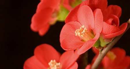Soft-boxed Bonsai Blooms