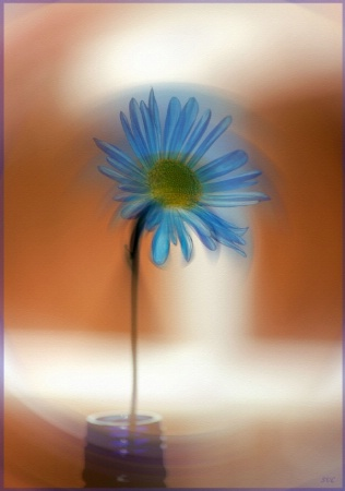 ~Ghost Flower~