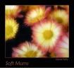 Soft Mums
