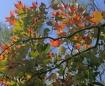 Backyard Colors