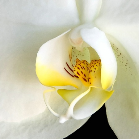Orchid Detail
