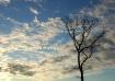 The January Tree