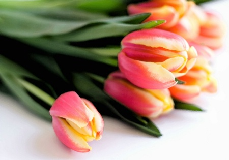 watercolor tulip bouquet