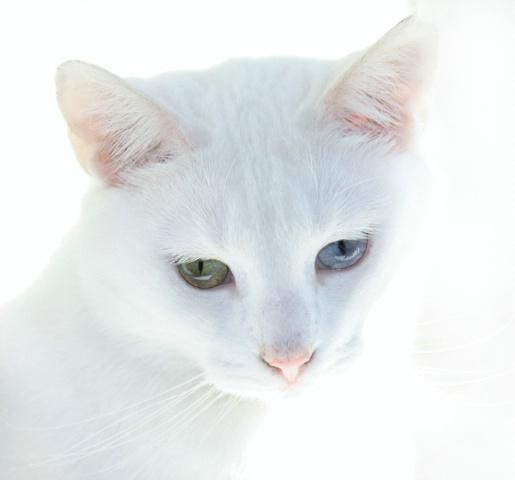Lillie's Eyes