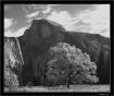 Yosemite Half Dom...