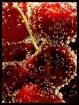<b>Cherry Sparkle...