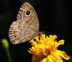 Butterfly taking ...