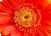 Flower - .40 sec,...