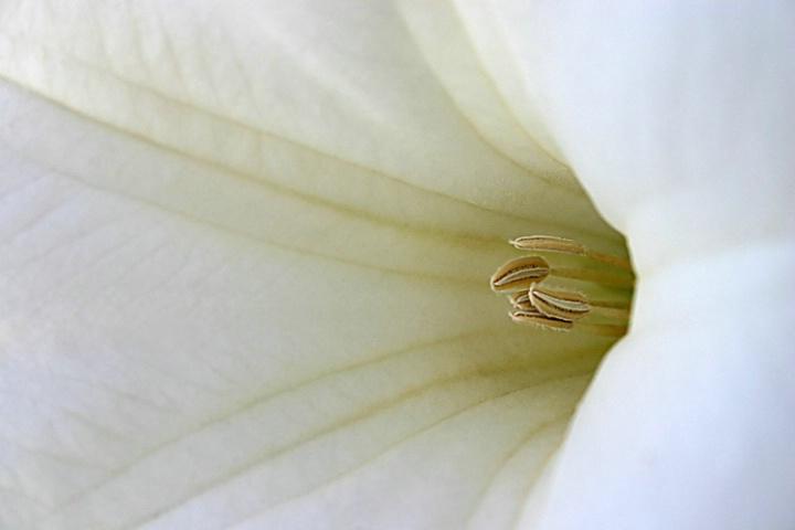 Velvety Soft