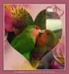 Love & Lovely Bir...