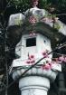 Cherry Blossoms a...