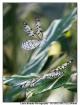 ~~butterflies~~