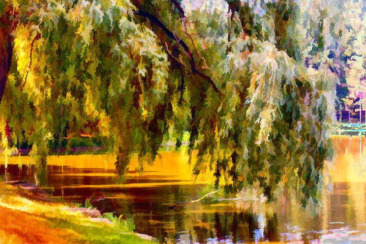 The Willow's Weeping