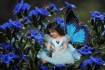 Butterfly Princes...