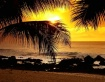 Palms in Hawaii