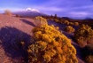 """Mt. Shasta 1..."