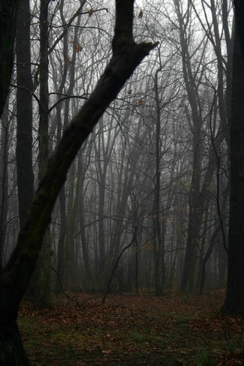 Trees - ID: 3489255 © Wayne R. Wright
