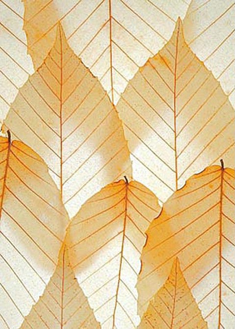 Fun With Beech Leaves