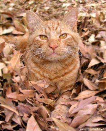 Nestled in the Leaves