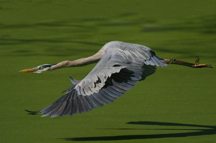 Gliding - ID: 3520681 © Kathy Reeves