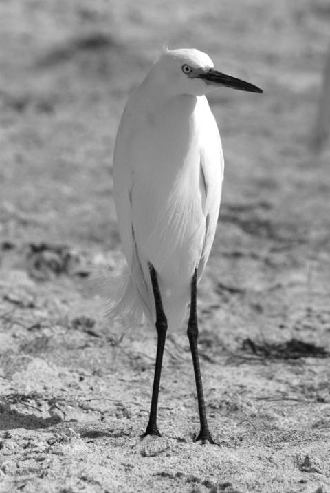 Who's Got Bird Legs?