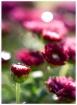 Flowers and Liqui...