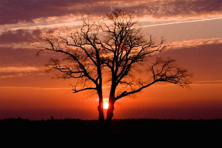 twin oak - ID: 3541555 © James W. Betts