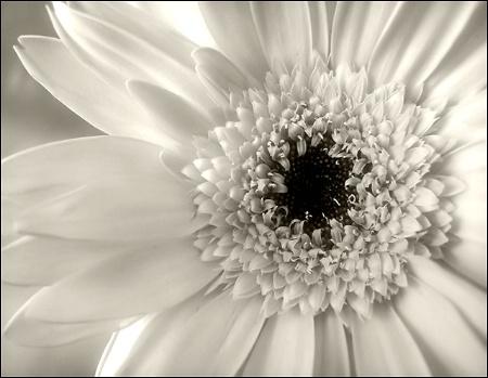 Cliche in Black & White