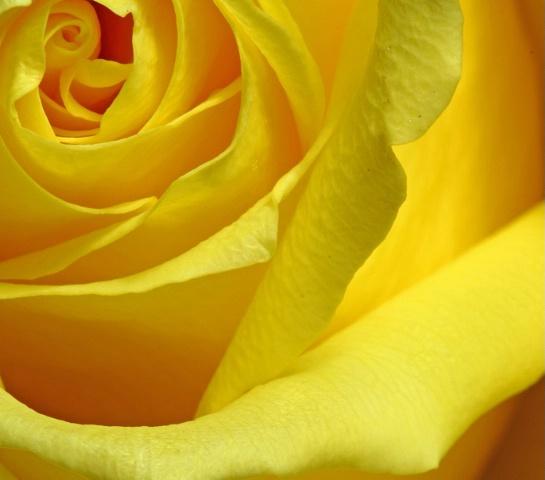 yellow unfolding