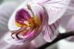 Flower Propeller